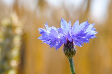 Foto auf Acrylglas Blumenhändler Bloeiende wilde bloemen in de bermen en weilanden