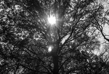 Abstract sunlight shining through tree branches. Sun rays shining through branches and leaves. Isolated tree in nature with sunrise sunset light shining through. Abstract art and design. Minimal art.
