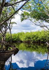 Mangroven in den Everglades, Florida, USA