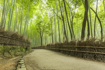 Path of Bamboo, Arashiyama, Kyoto, Japan