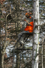 Wall Mural - Deer Hunter in a Tree Stand