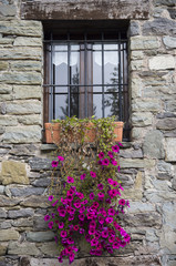 Petunia flowers in the window