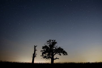 two old trees under a starry sky