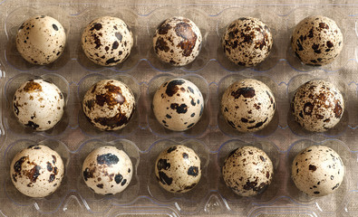 Overhead view of quail eggs in plastic holder
