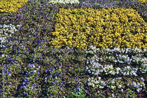 Aiuole fiorite immagini e fotografie royalty free su for Aiuole fiorite immagini