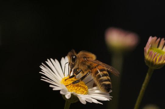 Animali, insetti, api