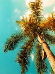 Palm tree against blue sky. Vintage toned. Nature landscape. Tropical background. View up