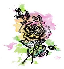 художественный рисунок роза,акварелью,эскиз