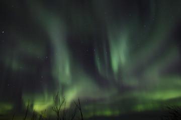 Aurora above trees