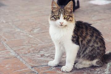 Stray cat looking at the camera