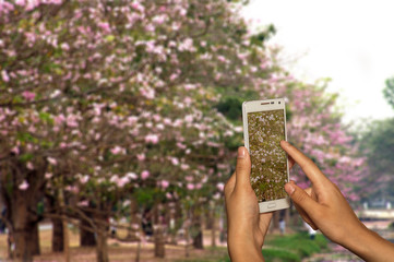 Hand of photographer with smart phone shooting image on blurred flowers on tree background.