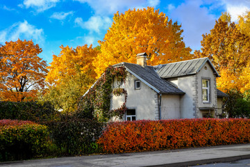 Small house surrounded by coloured trees on a sunny autumn day