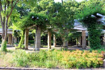 大泉緑地のパーゴラ