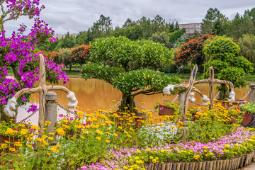 Trees in a park at a bank of a pond in Vietnam Dalat city