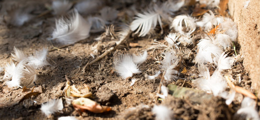feathers on the ground