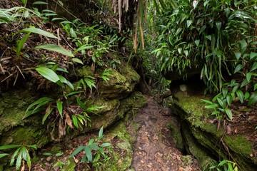 Deep wet jungle