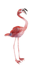 Pink flamingo isolated on a white background, watercolor