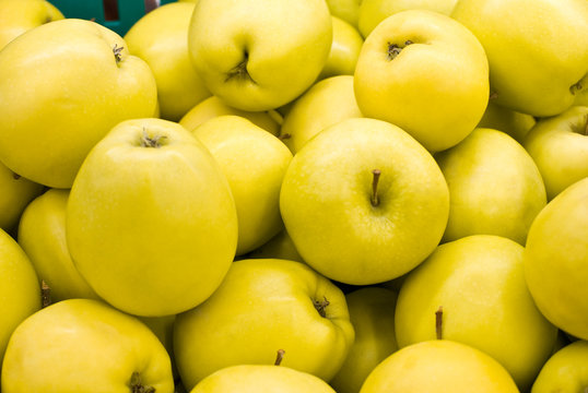 yellow apples. group. many