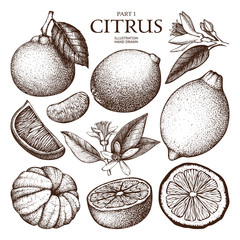 Vintage Ink hand drawn collection of citrus fruits sketch. Vector illustration of highly detailed citrus fruits on white background