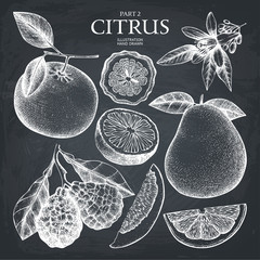 Vintage Ink hand drawn collection of citrus fruits sketch. Vector illustration of highly detailed citrus fruits on chalkboard