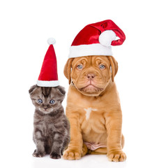 Sad puppy and small kitten in red santa hats sitting together. isolated on white