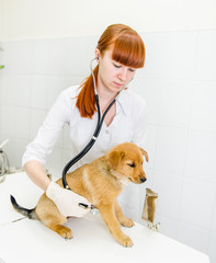 Female veterinarian examining a puppy dog