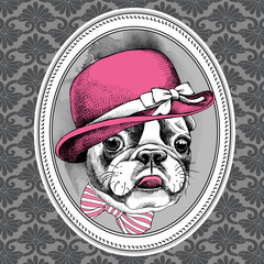 Frame with image of French Bulldog in pink Elegant women's hat and bow. Vector illustration.