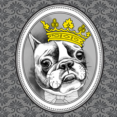 Frame with image of French Bulldog in crown and tie. Vector illustration.