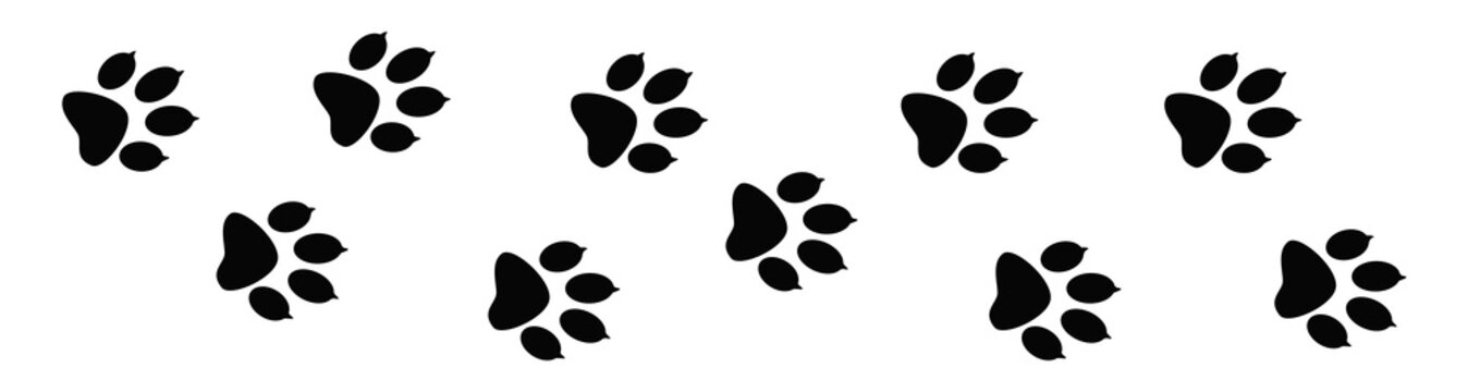 Paw prints. Animal tracks on a white isolated background. Steps animal drawn for the design of backdrops.