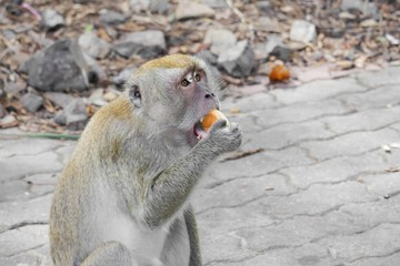 monkey eat bread nature in Thailand Closeup