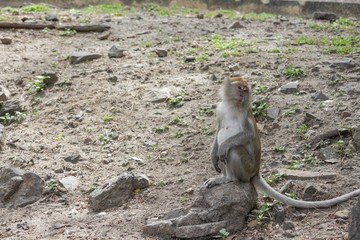 monkey stand on floor selective focus