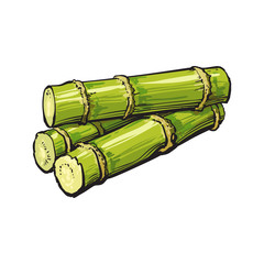 Pile of fresh raw green sugar cane, sketch style vector illustration isolated on white background. Realistic hand drawing of green sugarcane, Jamaican rum ingredient