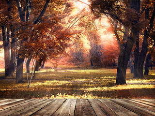 wooden podium, coming in autumn park