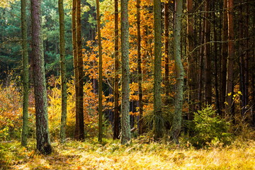 Autumn forest in South Bohemia