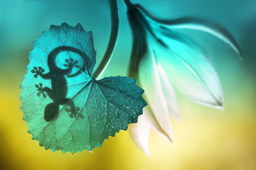 Lizard shadow on green sheet close-up macro. Lizard and a flower on a beautiful soft turquoise and yellow background summer outdoors. Very nice stunning artistic image. Desktop wallpapers, postcard.