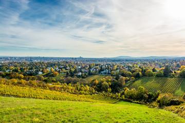Weinberg im Herbst vor der Skyline von Wien in Österreich