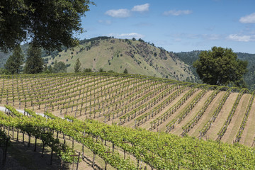 Gold Hill Vineyard, Coloma