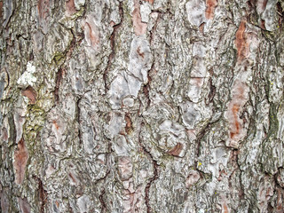 Natural texture of a tree bark