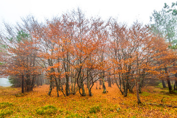 Autumn trees in the forest / Beautiful Colorful Autumn Leaves / autumn season