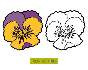 Coloring book, flower Pansy
