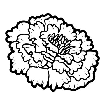 Coloring book, flower Marigold