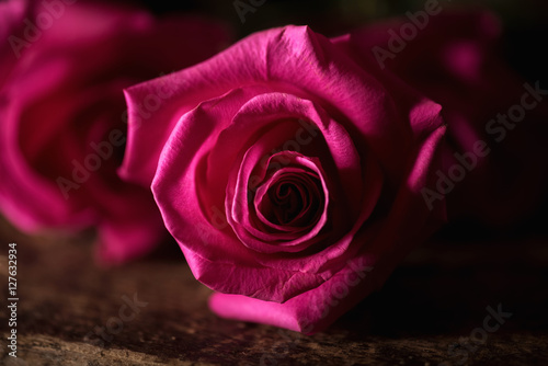 subdued lighting led pink roses in subdued lighting lighting