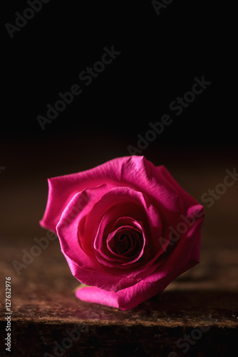 subdued lighting pink rose in subdued lighting with copyspace copyspace