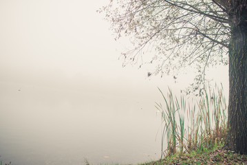 On the bank of a river in the fog