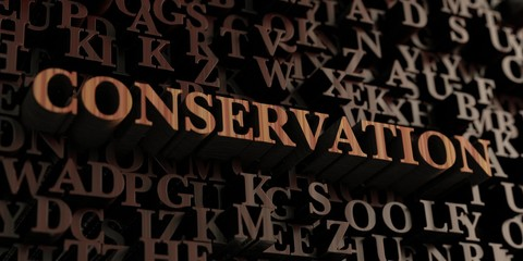 Conservation - Wooden 3D rendered letters/message.  Can be used for an online banner ad or a print postcard.
