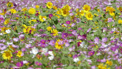 flower garden with very nice weather for background