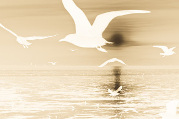 Seagulls flying over sea,blurred motion and invert image