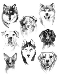 Watercolor dogs set on white background