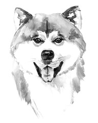 Watercolor hand drawn dog Akita inu on white background
