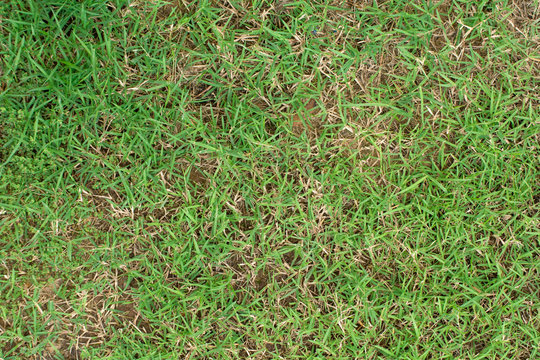 damage to green lawns